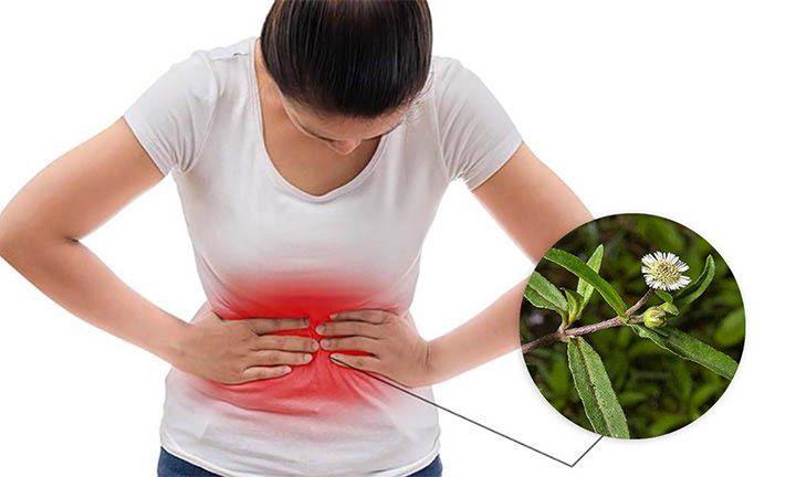 Những bài thuốc từ cây nhọ nồi chữa đau dạ dày